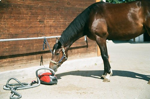 Horse with vacuum cleaner