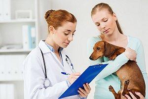 Allergietest beim Hund