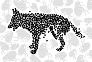 hundefloh-kratzen